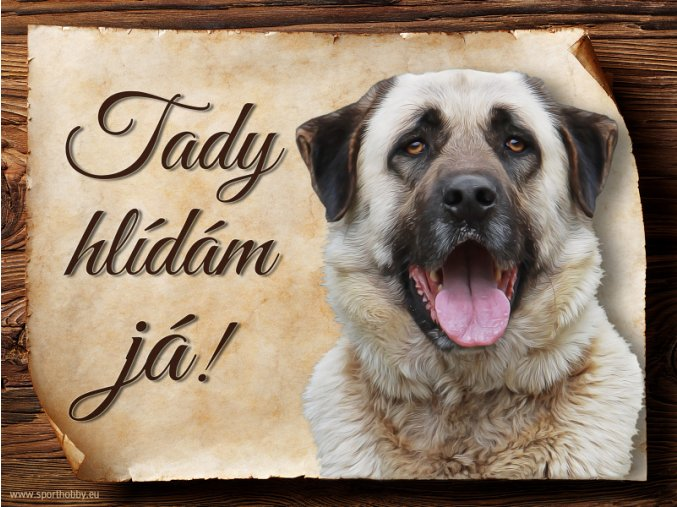 1204 Cedulka Anatolský pastevecký pes
