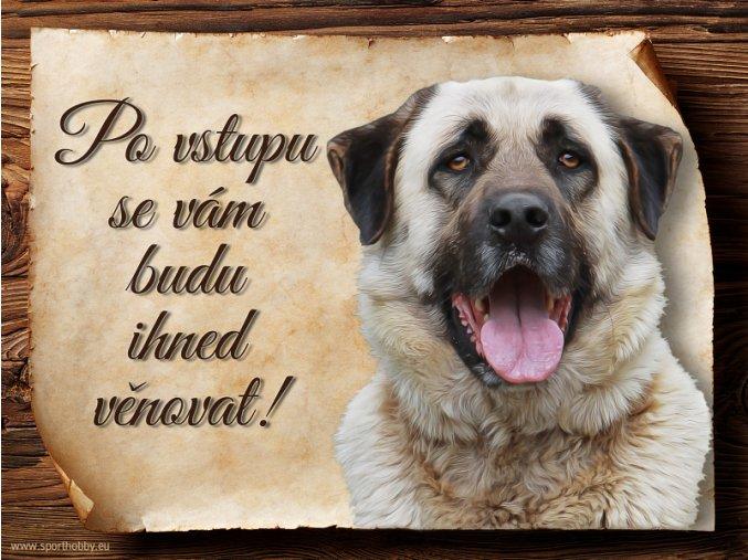 1207 Cedulka Anatolský pastevecký pes