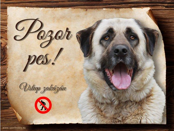 1208 Cedulka Anatolský pastevecký pes