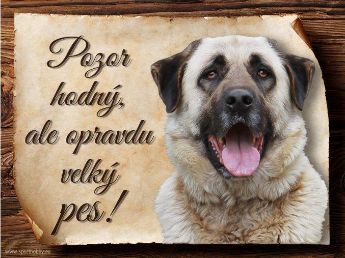 1210 Cedulka Anatolský pastevecký pes