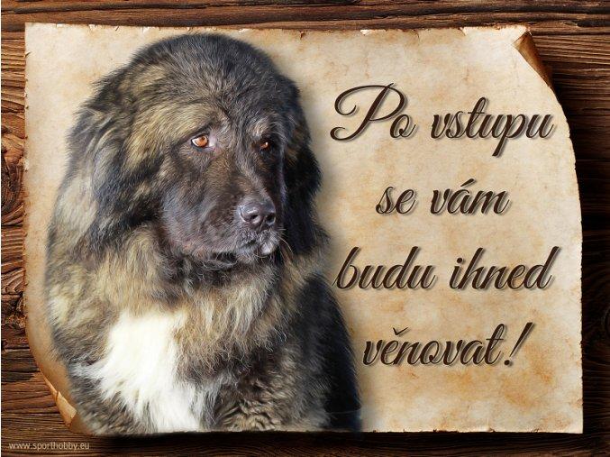 1145 Cedulka Kavkazský pastevecký pes