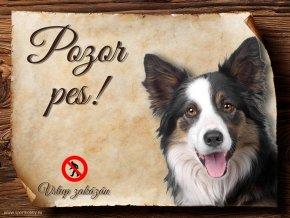 Cedulka Border kolie I - Pozor pes zákaz/CP171