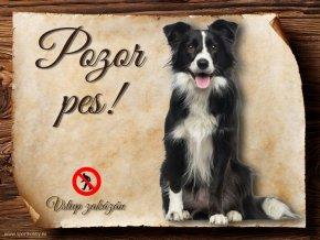 Cedulka Border kolie IV - Pozor pes zákaz CP201