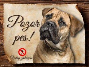 Cedulka Bulmastif - Pozor pes zákaz/CP015