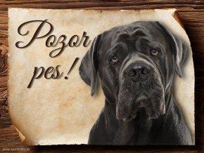 Cedulka Cane Corso - Pozor pes/CP017
