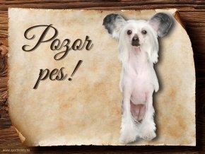 Cedulka Čínský chocholatý pes II - Pozor pes/CP636