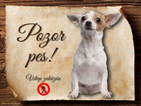 Cedulka Čivava III - Pozor pes zákaz/CP519