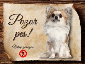 Cedulka Čivava V - Pozor pes zákaz/CP531