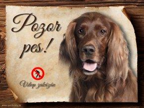 Cedulka Irský setr - Pozor pes zákaz/CP477