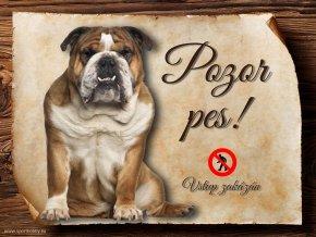 Cedulka Anglický buldog - Pozor pes zákaz/CP087