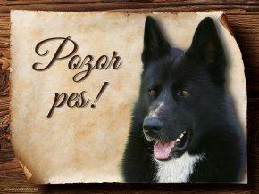 444 Cedulka Karelský medvědí pes II