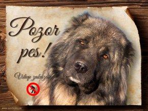 Cedulka Kavkazský pastevecký pes - Pozor pes zákaz/CP738