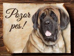 Cedulka Anglický mastif - Pozor pes/CP594
