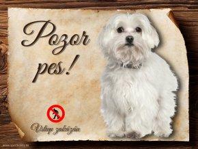 Cedulka Maltézský psík - Pozor pes zákaz/CP225