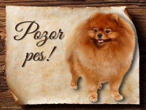 Cedulka Pomeranian - Pozor pes/CP434