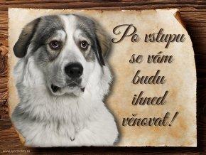 Cedulka Pyrenejský horský pes - Po vstupu .../CP049