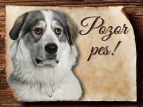 Cedulka Pyrenejský horský pes - Pozor pes/CP047