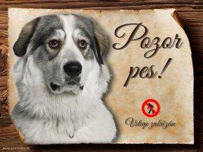 Cedulka Pyrenejský horský pes - Pozor pes zákaz/CP050
