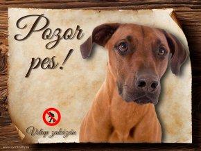 Cedulka Rhodéský ridgeback - Pozor pes zákaz/CP195