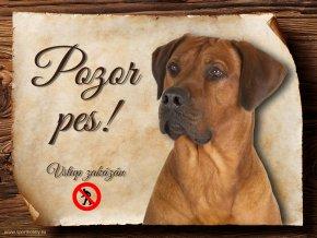 Cedulka Rhodéský ridgeback II - Pozor pes zákaz/CP543
