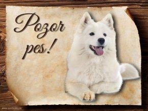 Cedulka Samojed - Pozor pes/CP156