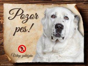 Cedulka Středoasijský pastevecký pes - Pozor pes zákaz/CP317