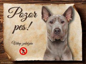 Cedulka Thajský Ridgeback - Pozor pes zákaz/CP664