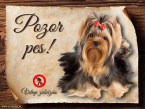 Cedulka Yokšírský terier - Pozor pes zákaz/CP299