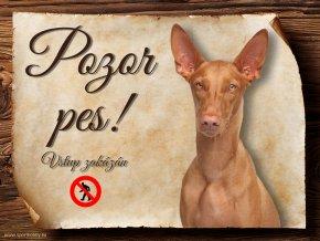 977 Faraonský pes