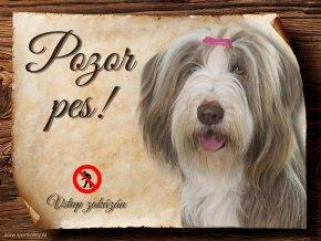 Cedulka Bearded kolie II - Pozor pes zákaz/CP279
