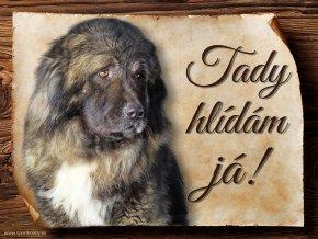 1142 Cedulka Kavkazský pastevecký pes