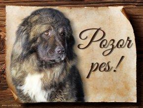 1143 Cedulka Kavkazský pastevecký pes