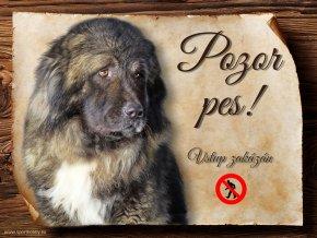 1146 Cedulka Kavkazský pastevecký pes