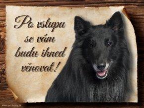 Cedulka Belgický ovčák Groenendael - Po vstupu .../CP370