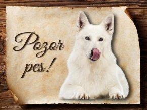 Cedulka Bílý švýcarský ovčák - Pozor pes/CP072