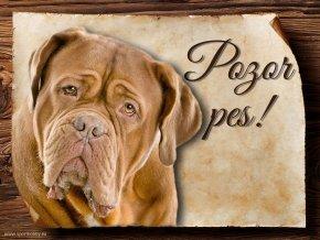 Cedulka Bordeauxská doga - Pozor pes/CP252