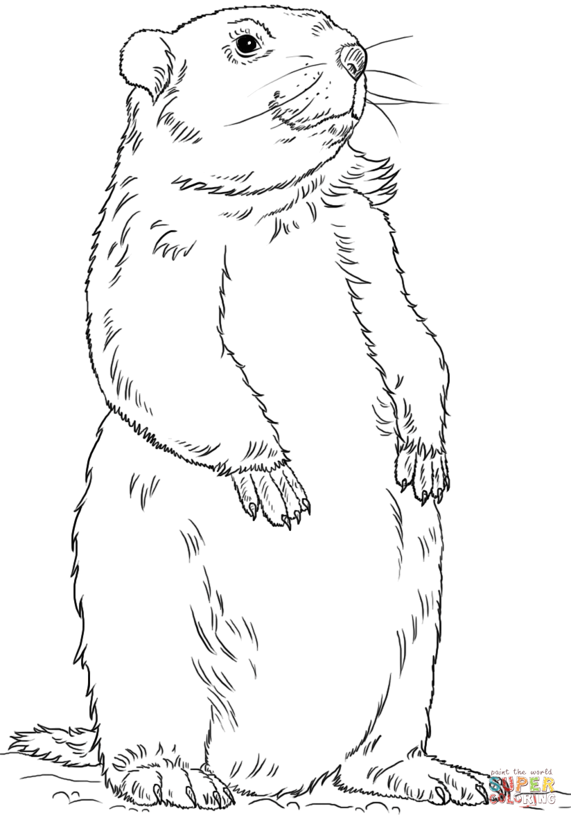 groundhog-coloring-page