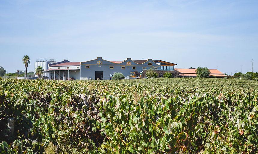 Představujeme vám rodinné vinařství Filipe Palhoca