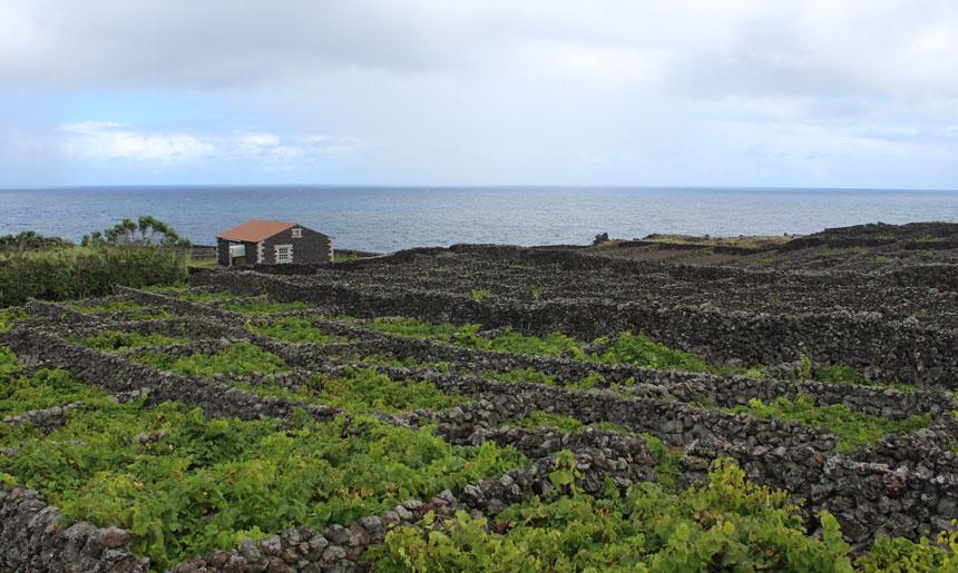 Vína z Azorských ostrovů