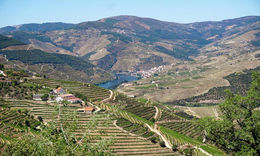 Douro, místo, kde zrají hrozny na portská vína