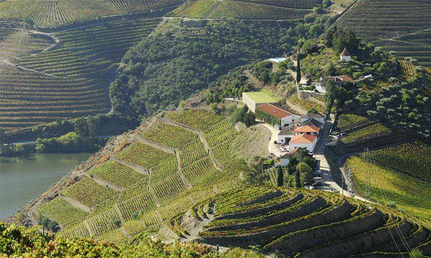 Quinta do Crasto aneb cesta ze stínu velkých firem na výsluní