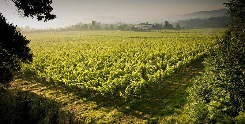 Vinho Verde, domov populárních zelených vín