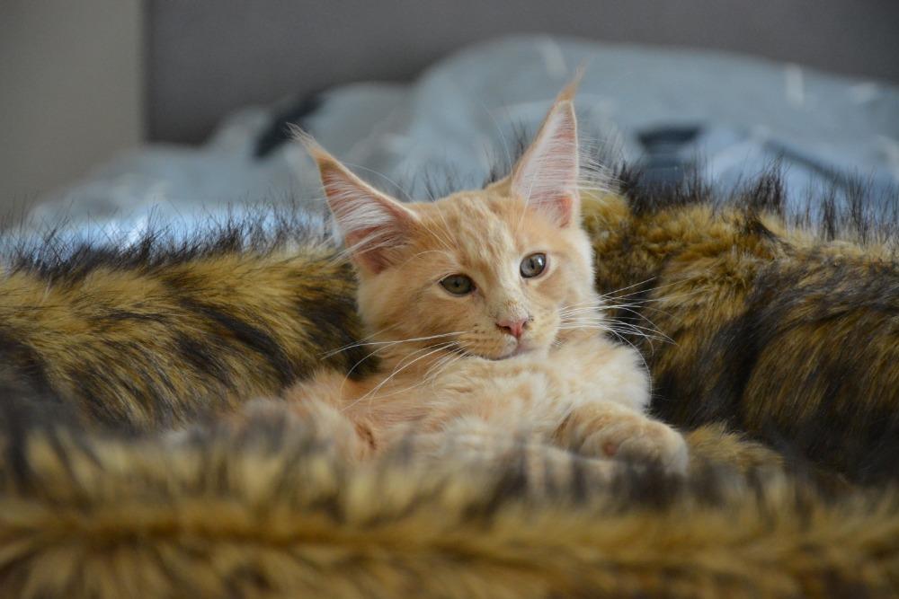 Pelechy pro velké kočky z kožešinky