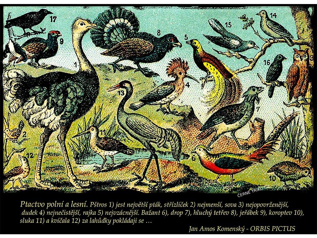 www.big černé ptáky