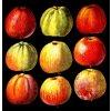 Jablka - tričko s potiskem (Pánské/Dámské Dámské černé, Velikost XXL)