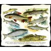 Ryby sladkovodní i mořské - tričko s potiskem (Pánské/Dámské Dámské černé, Velikost XXL)