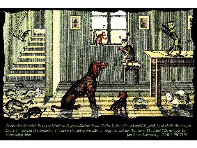 Domácí zvířata - Orbis pisctus (Pánské/Dámské Pánské černé, Velikost XXL)