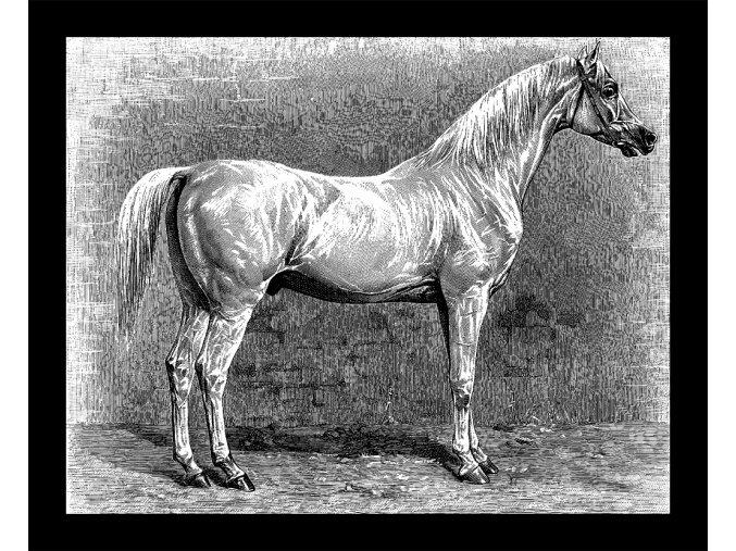 Arab - kůň pro vytrvalost - tričko s potiskem (Pánské/Dámské Dámské černé, Velikost XXL)