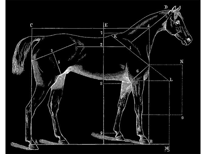 Jak změřit koně - tričko s potiskem (Pánské/Dámské Dámské černé, Velikost XXL)