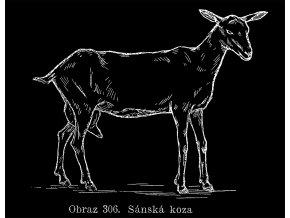 koza sánská tričko s obrázkem kozy